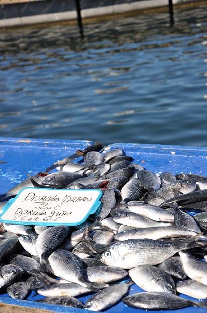 marché aux poissons, Marseille 10