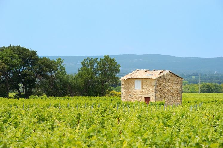 vignoble provençal