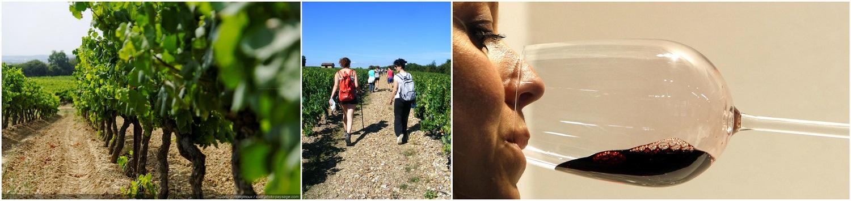 collage 1 vin vaucluse