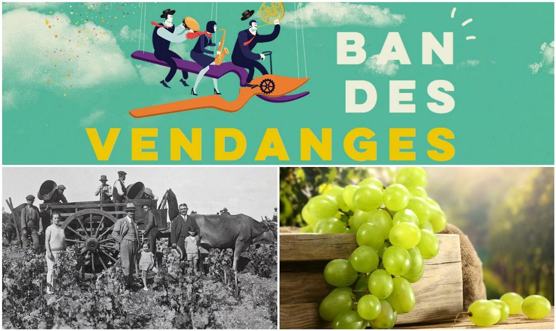 Le vignoble de Provence en fêtes