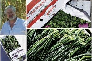 philippe-ayme-la-boite-a-herbes