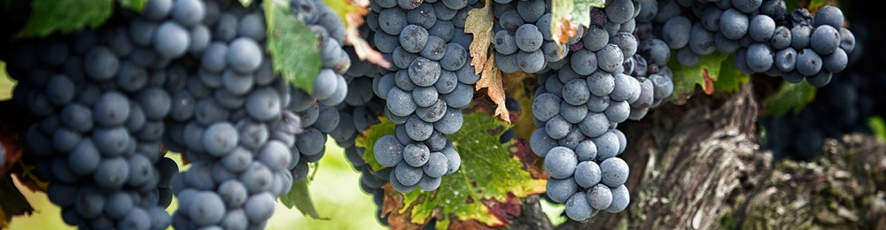 Le vin en fêtes partout en Provence