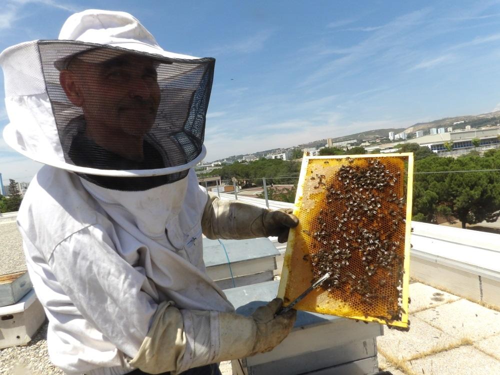 apiculteur brignoles
