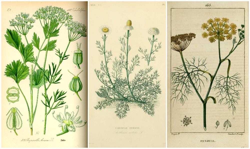 plantes au secours de notre santé
