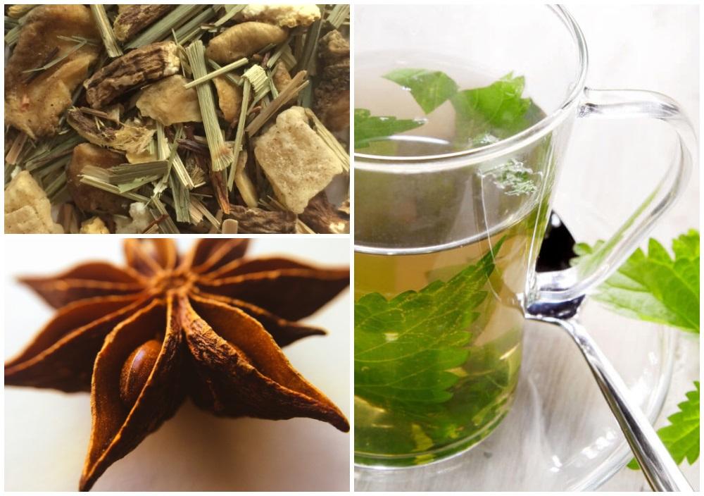 plantes et infusions