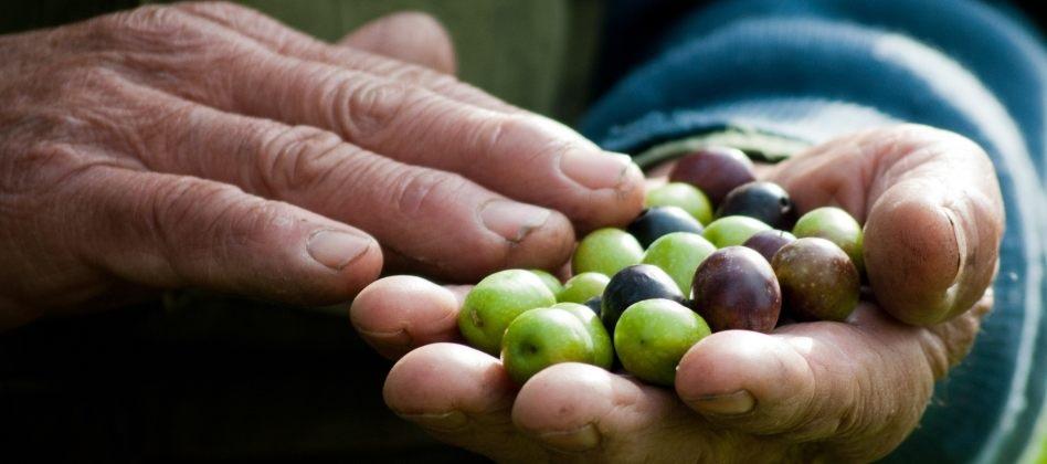 huile d'olive de Provence olives